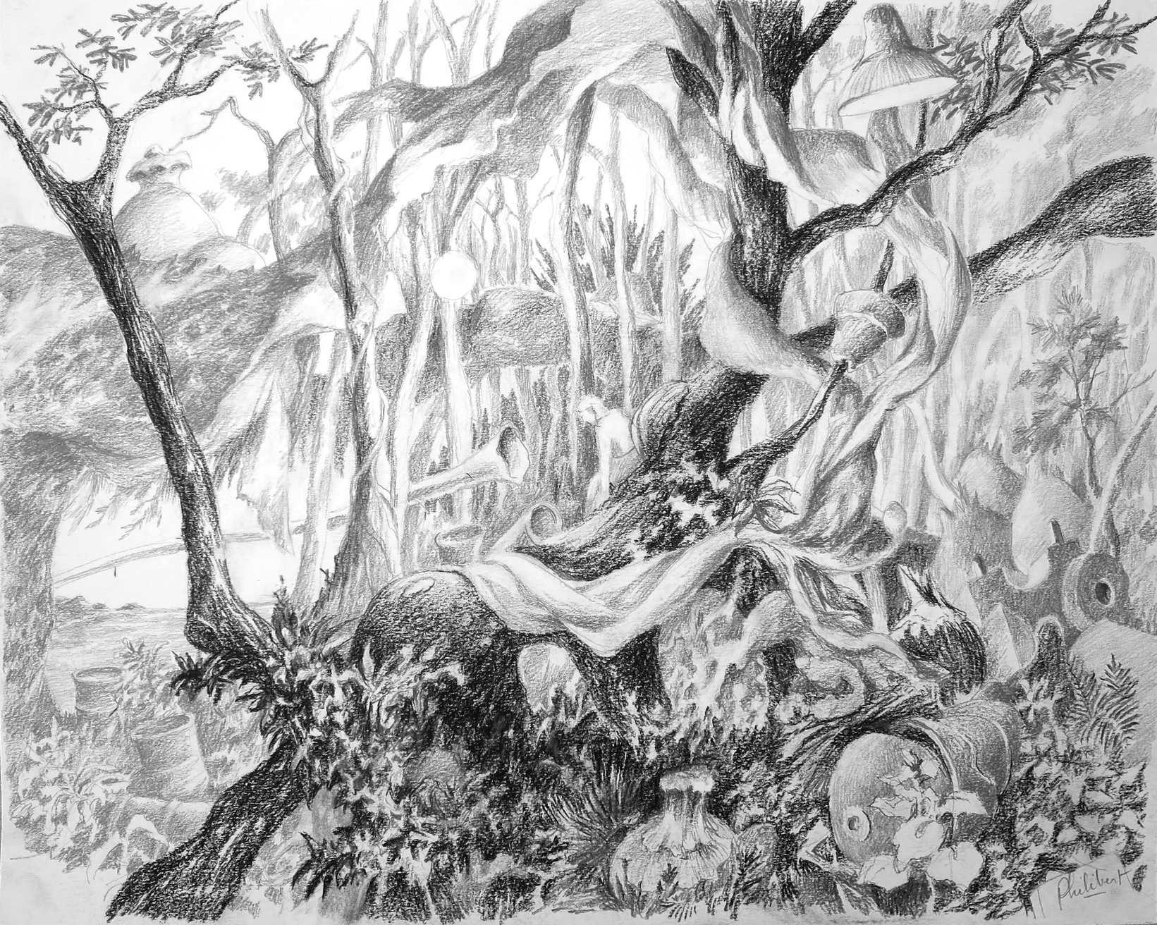 Cheveu de Venus, crayons et pierre noire, 40 X 50 cm, juin 19